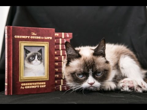 История сварливого (грустного) кота. Grumpy Cat