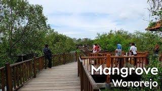 Taman Wisata Hutan Mangrove Wonorejo Surabaya HD 1080p