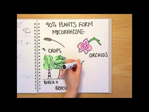 Video image: What is a fungus?