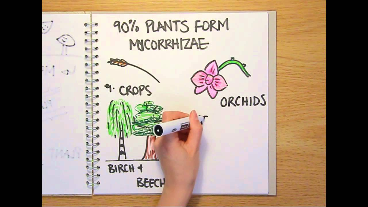What Is A Fungus Naked Science Scrapbook Youtube