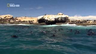 Sharkville   Die Bucht der weißen Haie   Doku über weisse Haie in HD Teil 1