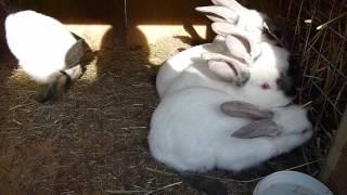 Сколько едят кролики. Часть №2