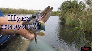 Ловля щуки летом на спиннинг***Щука, жырует!(отчеты о рыбалке).