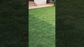 Landscape Gardening Service Request A Free Estimate - Balaji Nursery