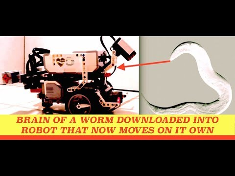 Brain of a Worm Downloaded into Robot that Moves on its Own