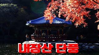 2019 내장산 단풍, 전라도여행, 한국여행, 우리나라…