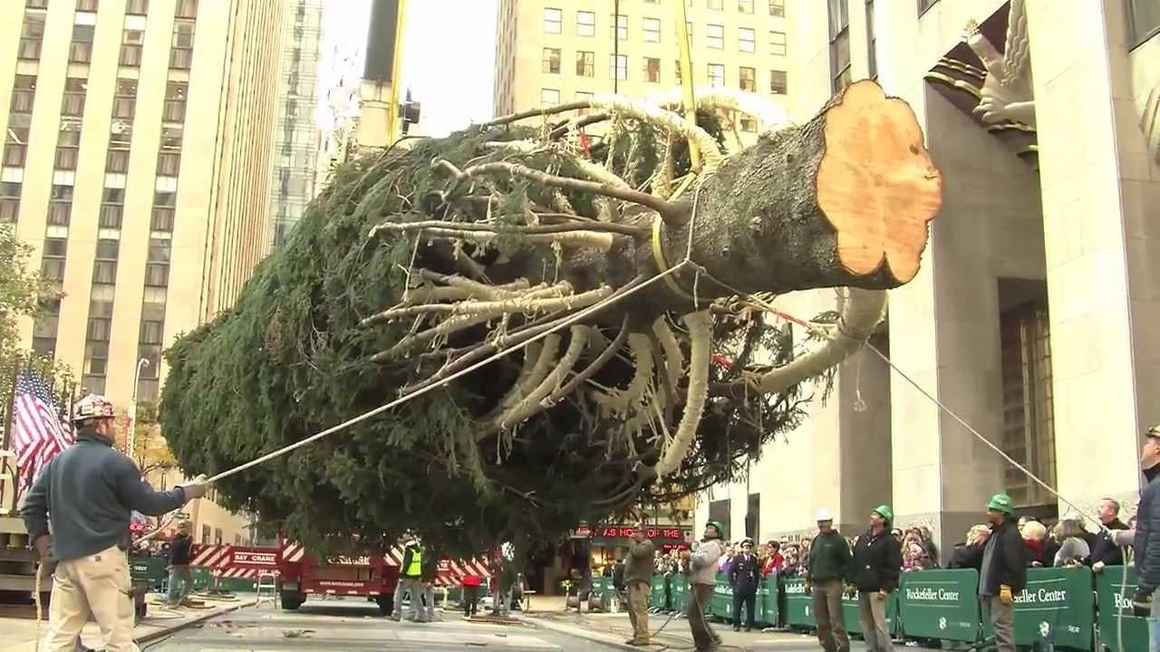 How The Rockefeller Center Christmas Tree Is Prepped Youtube