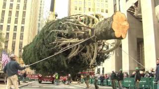 How the Rockefeller Center Christmas Tree is Prepped