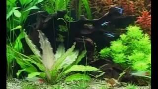 Аквариумные растения(Описание аквариумных растений., 2016-08-02T08:58:38.000Z)