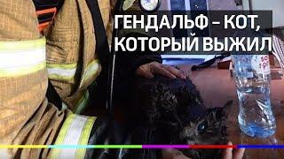 В Екатеринбурге спасатель сделал искусственное дыхание коту