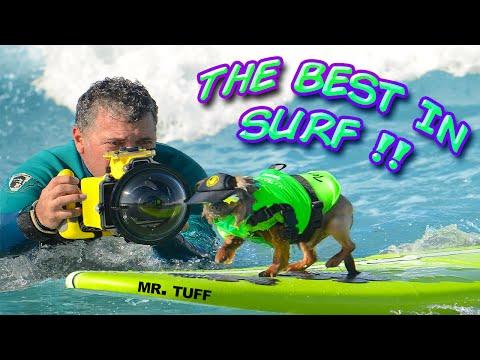 Surfing Dog Surf A Thon 2014 Surf Dog Helen Woodward Contest Best of Surf