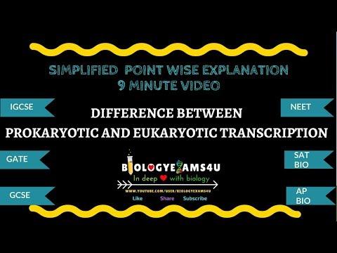 Difference Between Prokaryotic And Eukaryotic Transcription