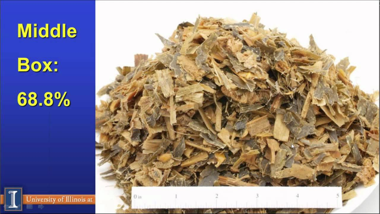 July 9: New corn silage utilization for dairy rations
