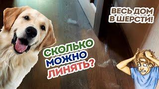 Собака сильно линяет! Сколько длится линька? Что делать? Плохой корм, аллергия или ...