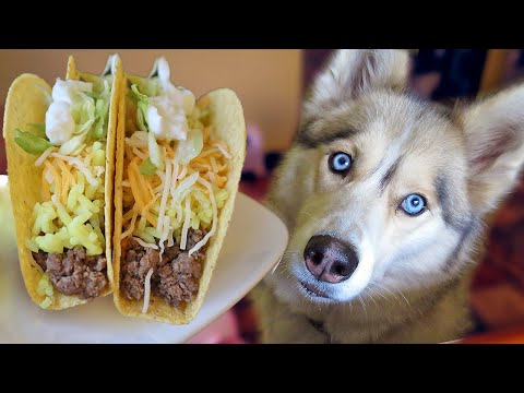 How to Make TACOS For Dogs | DIY Dog Treats 118