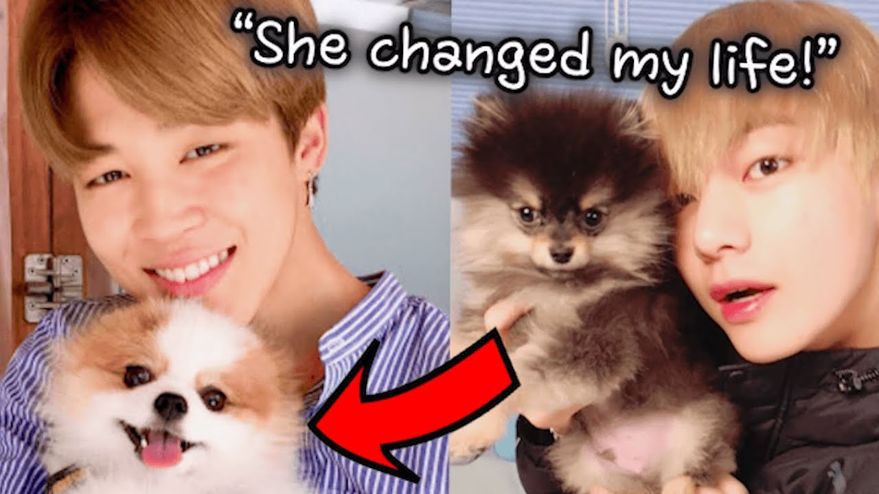 All about BTS' Pets! Introducing BTS' New Family