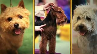 Johnson lent voice to Westminster Kennel Club Dog Show