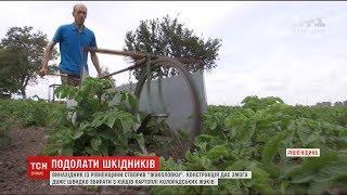 Винахідник з Рівненщини створив 'жуколовку' для збору колорадських жуків