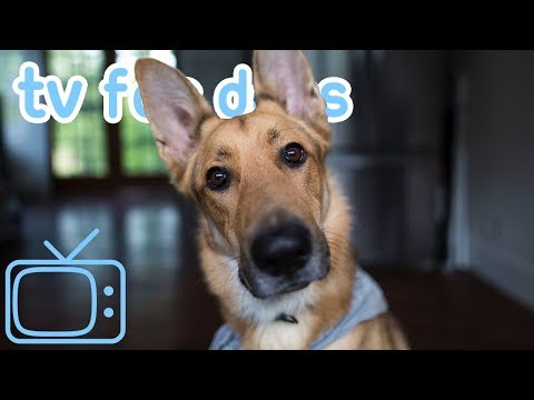 Relax Your Dog TV - Calming Virtual Walk Therapy for Pets and Humans - Used by 10 million 🐶🥰