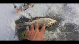 Первый лед Плотва монстр Рыбалка на маленьком озере