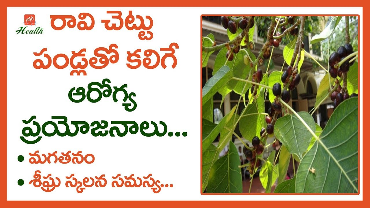 peepal tree uses in english