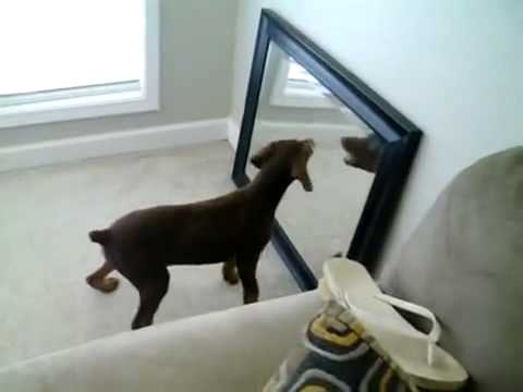 Lustige Hunde Video Kostenlos