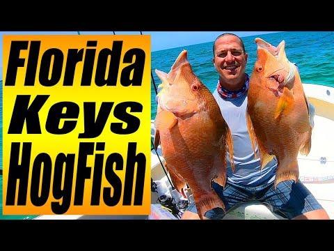 Key Largo Hogfish / Summer Fishing Ideas (2019) Episode 2