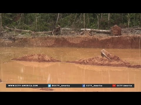Mercury used in Peru's Amazon gold rush causing health crisis