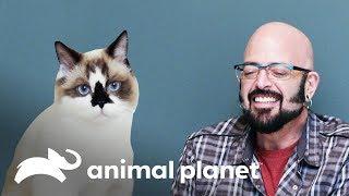 ¡Este gatito no deja de lamerlo todo! | Mi gato endemoniado | Animal Planet
