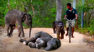 Baby elephants go out for a walk