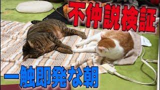 【一触即発】不仲説な猫達の朝を観察したら意外な結果が…!!
