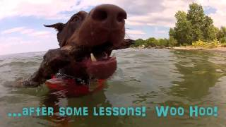 (2/2) Zeus! The Red Doberman - Swimming Lessons At Confederation Dog Park Beach