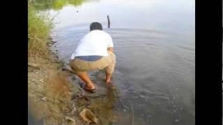 大头先生抢鱼竿大戰9 2kg 多曼鱼 彭亨karak 2月16日2012年