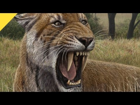 Huge Fossil Footprints of Saber-Toothed Cat Discovered | Prehistoric News