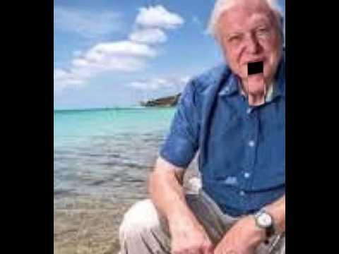 Sir David Attenborough impression.