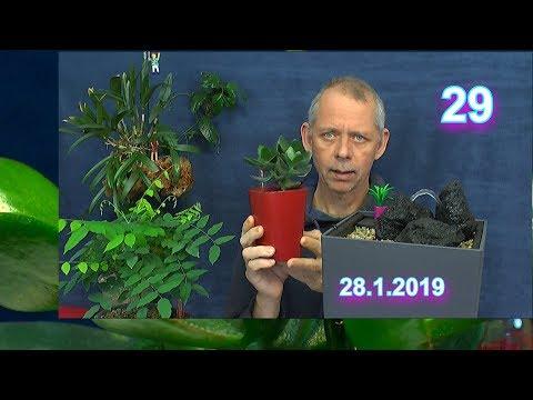 auch-sukkulente-wachsen-im-wasser-/-entdecke-die-welt-der-pflanzen