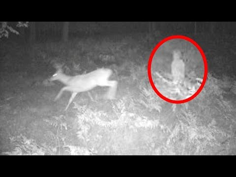 Real Black Eyed Children Caught On Tape On Trail Cam?