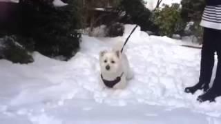 東京に大雪です。カフー君も初めての雪に大喜びです。