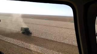 Pima cotton picking in California