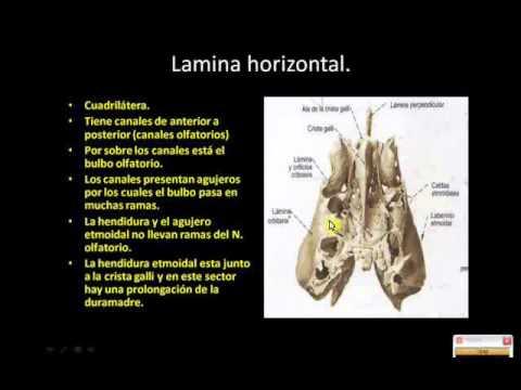 etmoides parte 2 - YouTube