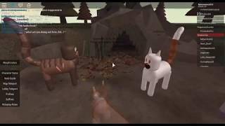 Squirrelkits Death I Roblox Warrior Cats Forest Territory I Partie 1