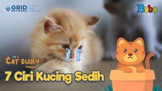 Kucing Lucu - 7 Ciri Kucing Sedih - Bobo Cat Diary Eps 124