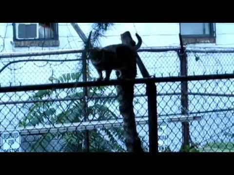 All For Animals TV #41: NYC Feral Cat Initiative TNR Program