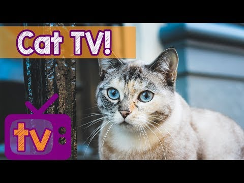 Cat TV – Best Videos for Cats with Calming Music and Nature Sounds – 9 Hour TV for Cats playlist