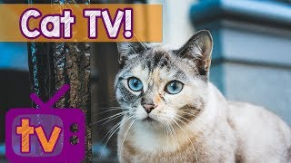 Cat TV - Best Videos for Cats with Calming Music and Nature Sounds - 9 Hour TV for Cats pl ...