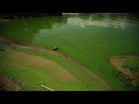 Saving the Great Lakes from toxic algae