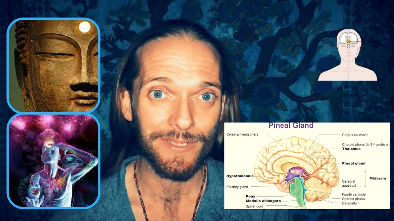 The pineal gland. Secrets of the third eye 29