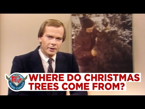 Where Christmas Trees Come From, 1981