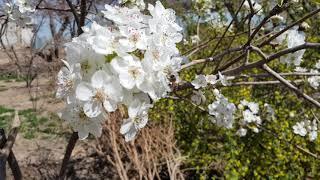 Бахор. Весна. Spring 2020