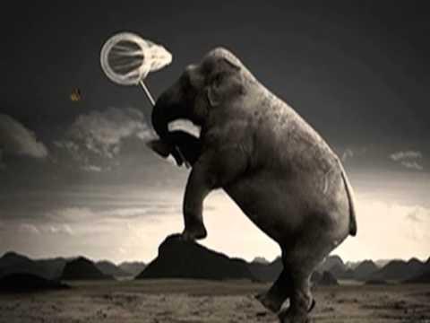 L'Elefante e la Farfalla-Michele Zarrillo